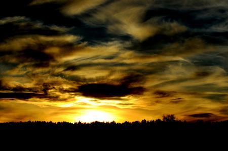 Заставки деревья, лес, закат, небо