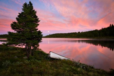 Обои лес, река, лодка, луна