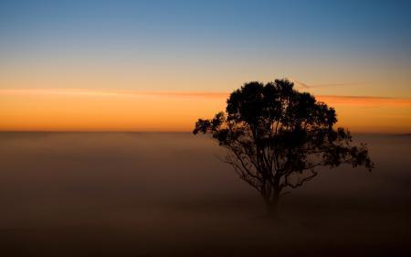 Обои закат, вечер, туман, дерево