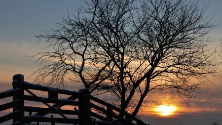 Картинки Зима, снег, забор, дерево