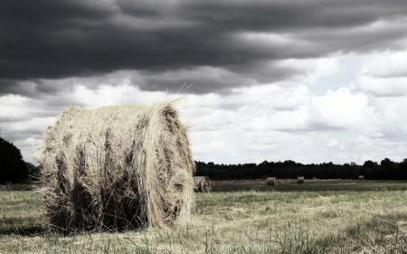 Обои поле, сено, природа