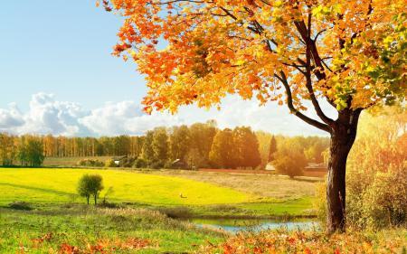 Заставки пейзаж, деревья, водоем, дом