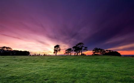 Фото природа, пейзаж. растения, трава, горизонт