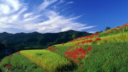 Картинки природа, трава, цветы, холмы