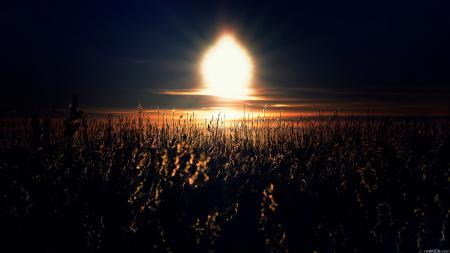 Обои трава, солнце, закат, поле