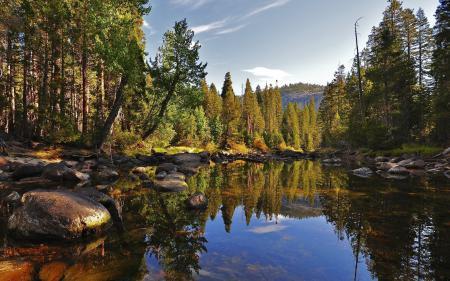Картинки природа, водоем, деревья, лес