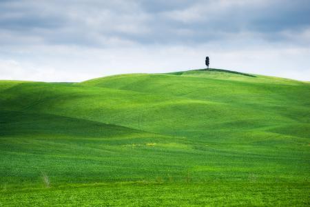 Картинки поле, газон, хломы, дерево
