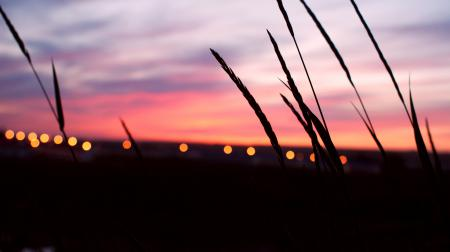 Картинки Закат, небо, колоски, огни