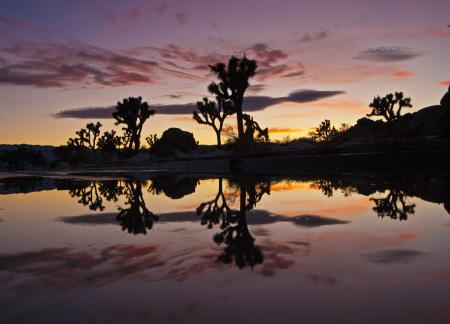 Заставки Joshua tree natoinal park, закат, сумерки, озеро