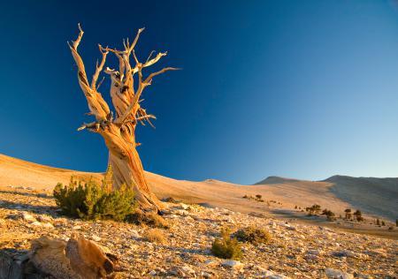 Заставки Пейзаж, пустыня, холмы, песок