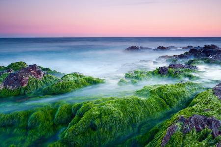 Картинки море, камни, водоросли, розовое
