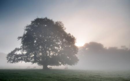 Обои утро, дерево, туман, пейзаж