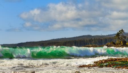 Фото море, волны, лес, природа