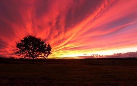 Фото поле, дерево, закат, пейзаж