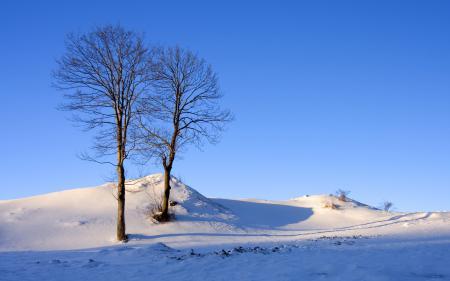 Заставки зима, снег, небо, деревья