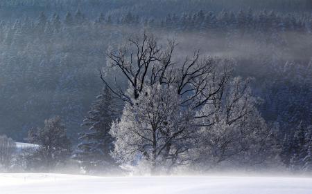 Заставки зима, поле, туман, деревья