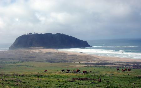 Заставки коровы, море, пастбище