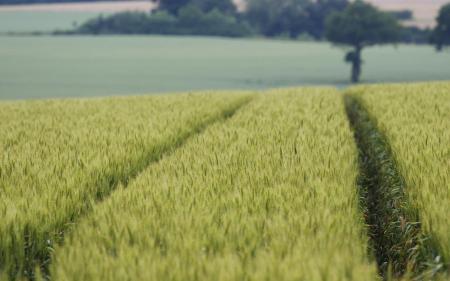 Заставки поле, дорога, пшеница, урожай