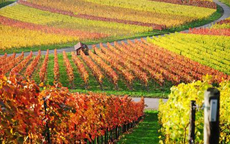 Заставки виноградники, дом, пейзажи, фото