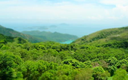 Фотографии фокус, пейзажи, деревья, листва