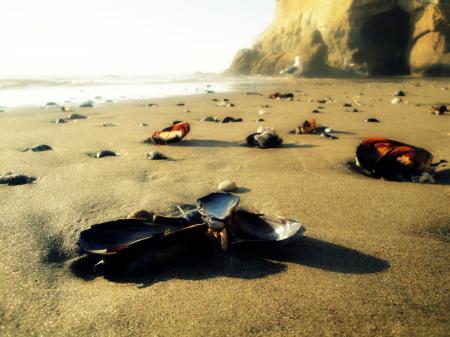Фото ракушки, камни, песок, море