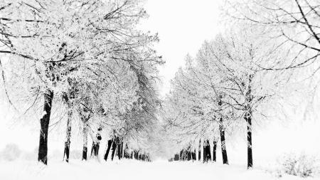 Фотографии зима, белое, деревья, снег