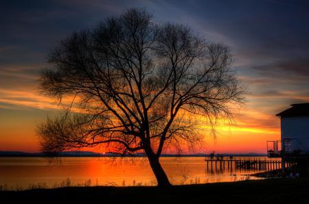 Картинки дерево, закат, пирс, озеро