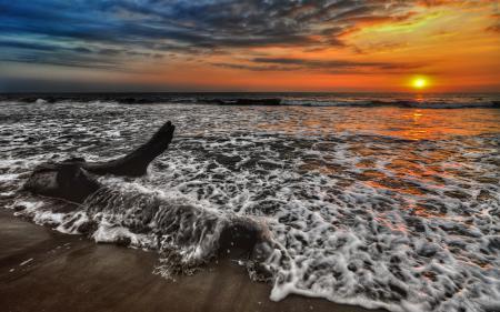 Обои море, пена, коряга, солнце