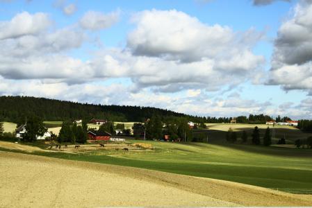 Фото поле, луг, трава, деревья