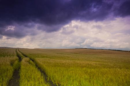 Обои поле, небо, тучи, облака