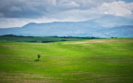 Картинки пейзаж, природа, трава, зелень