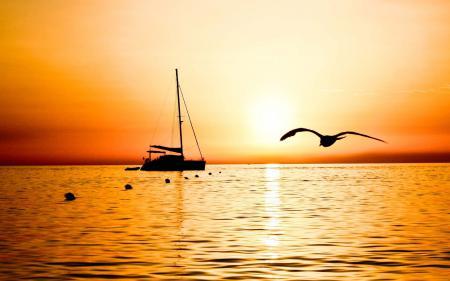 Картинки яхта, чайка, море, закат