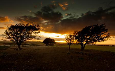 Заставки закат, небо, облака, деревья