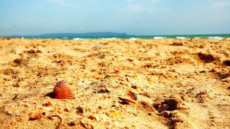 Заставки Пляж, лето, ракушка, песок