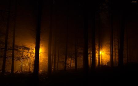 Фото ночные огни, evening lights, лес, ночь