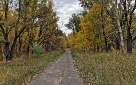 Обои дорога, лес, осень, пейзаж