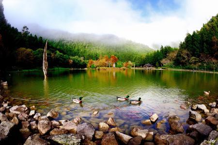 Обои парк, озеро, пруд, утки