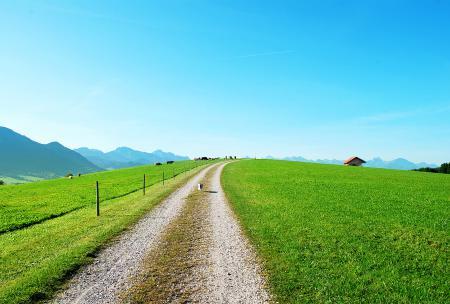 Обои трава, лето, дорога, забор
