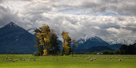 Фото пейзажи, природа, животные, овца