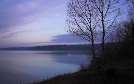 Картинки дерево, озеро, лес, сумерки