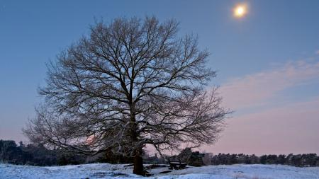 Фотографии зима, снег, лес, дерево