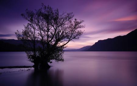 Фотографии дерево, закат, водная гладь, горы