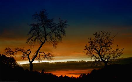 Фото природа, пейзаж, вечер, деревья