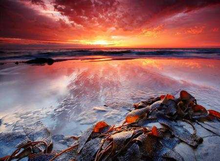 Картинки море, закат, берег, водоросли