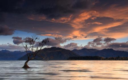 Фотографии Birds on a Tree, Lake Wanaka, New Zealand