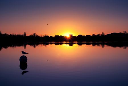 Картинки озеро, закат, птица