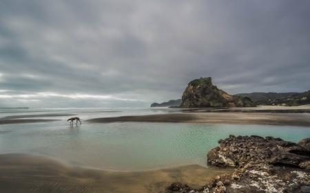 Заставки море, небо, собака, пейзаж