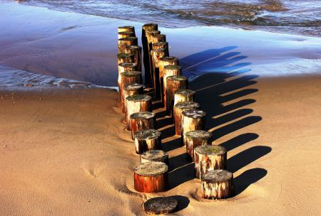 Фото море, песок, пеньки, пенек