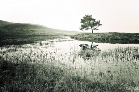 Фотографии река, дерево, пейзаж