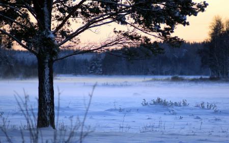 Обои поле, дерево, зима